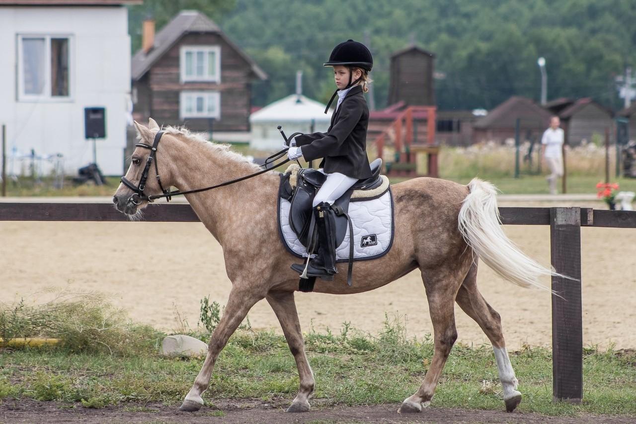 Чемпионат Красноярского края по адаптивному конному спорту